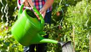Gardening therapy helps women on long-term sick leave return to work