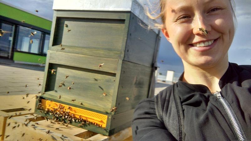 """Katharina Schmidt aus dem G-Lab mit ihren """"Bildungsbienen"""" auf dem Dach eines Gebäudes der Hochschule Karlsruhe"""