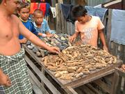 Sale of dried sea cucumbers in Indonesia