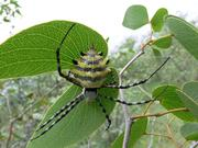 Spiders and other animals are important for forest ecosystems.