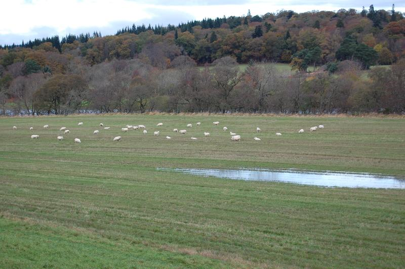 Livestock farming is one way how faecal bacteria get into soil and water bodies