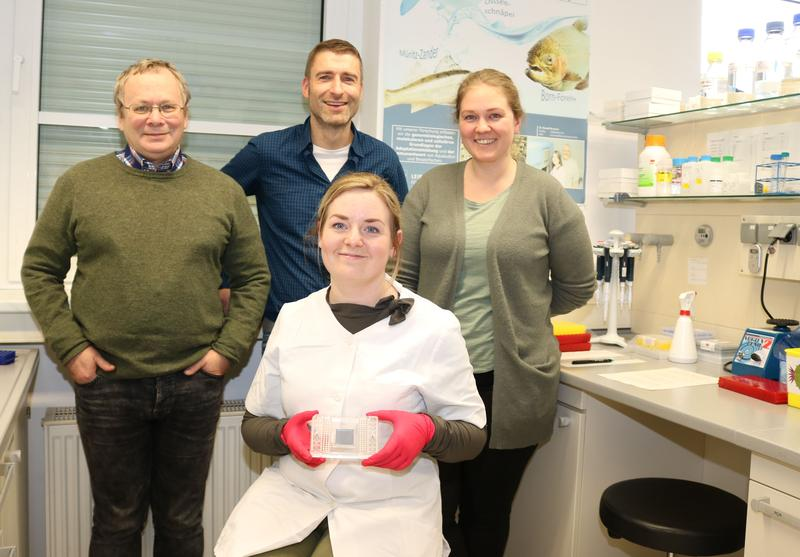 Laboratory assistant Luisa Falkenthal (seated) shows cell cultures of farmed salmon; with Dr. Aleksei Krasnov (from left), Dr. Alexander Rebl and Anne Flore Bakke.
