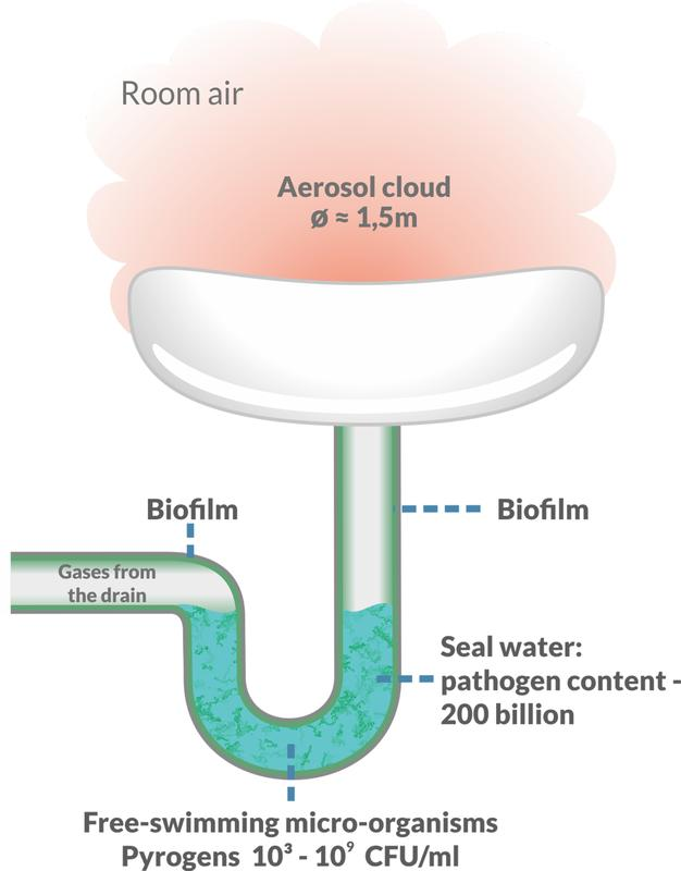 Schematic representation of the bacterial problem area in a sink/siphon