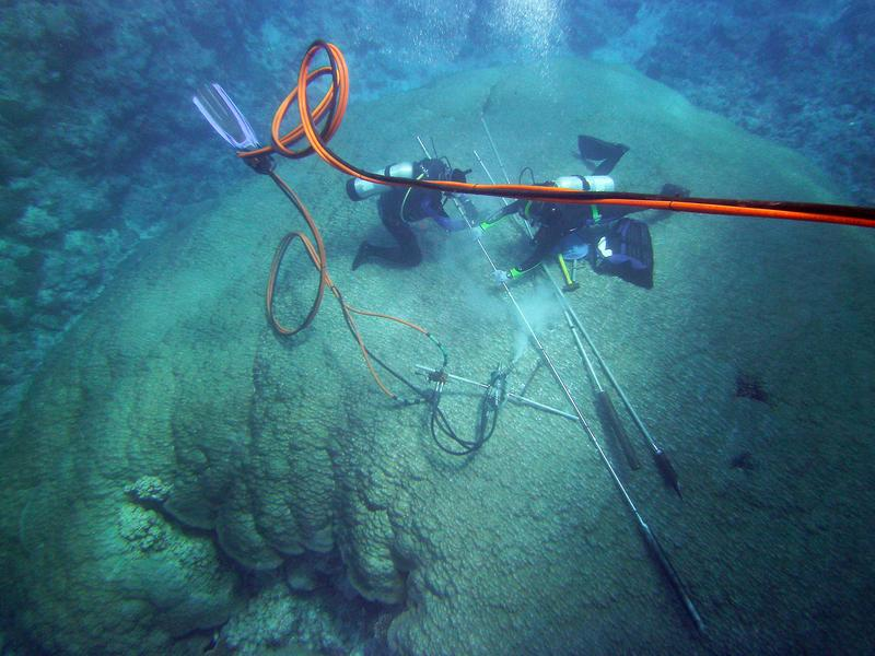 Researchers take a drill core from a hard coral of the genus Porites in the reef off American Samoa. To protect the coral, the borehole is then filled with cement.