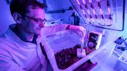 Prof. Dr. Stefan Streif  controls the irrigation, lighting spectrum and ventilation of a hydroponic plant culture in the special laboratory for networked agricultural systems at Chemnitz University.