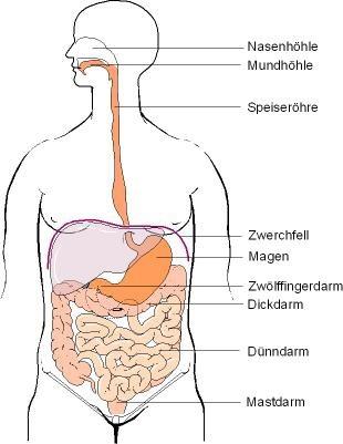 dünndarm ernährung