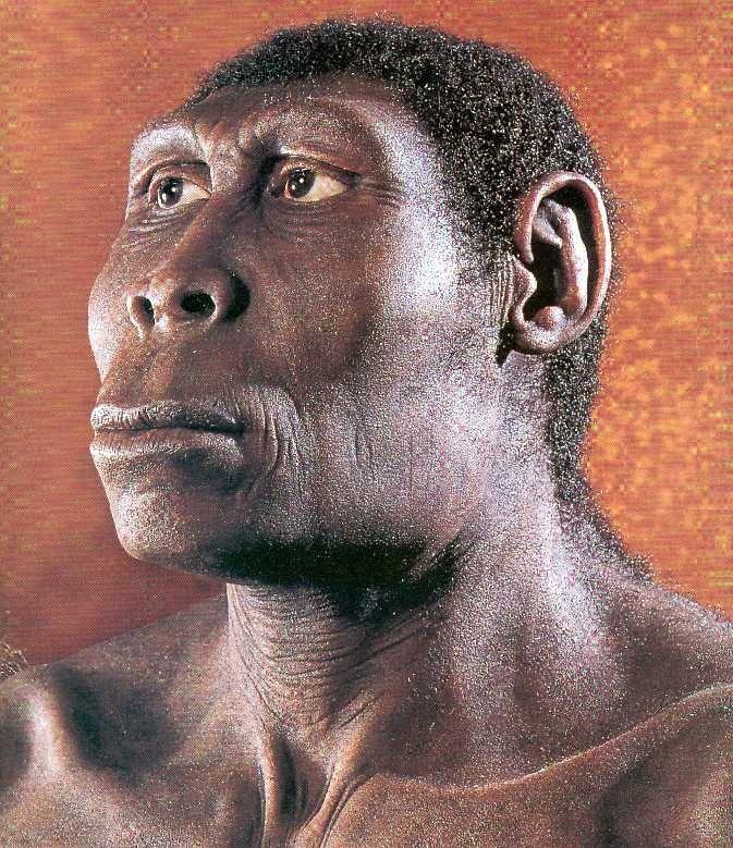 Homo erectus 1995 by joe damato - 3 part 2