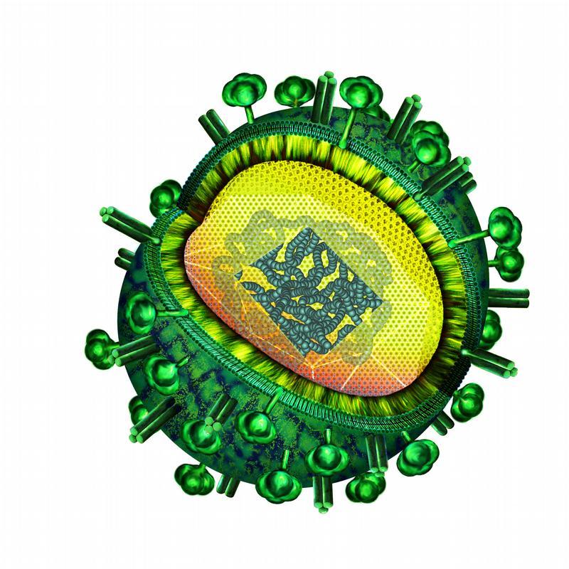 idw - Bild zu: Netzwerk gegen das Grippevirus