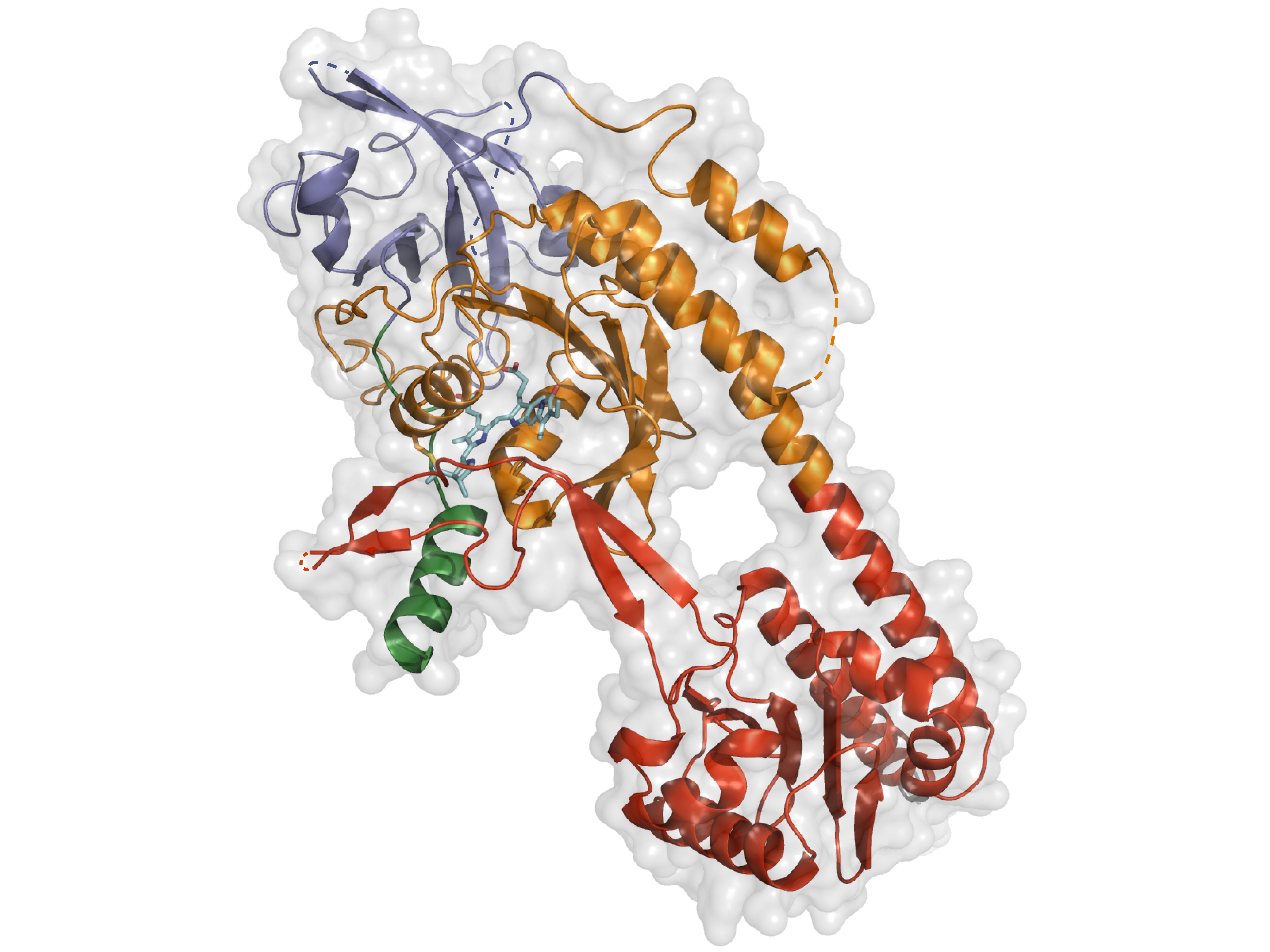 Phytochrom