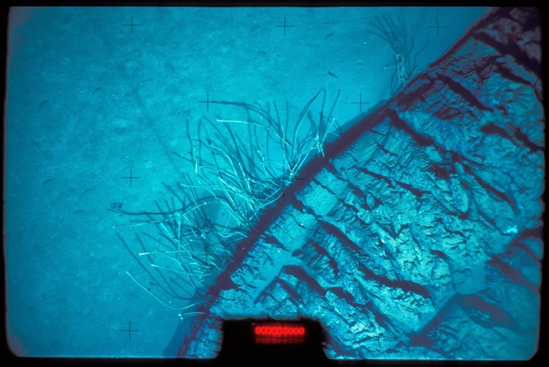 When the National Oceanic and Atmospheric Administration set an underwater vessel out to explore the Gulf of Mexico they were expecting to find a shipwreck