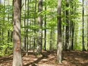 Through their complementary crown and root systems, trees in mixed forests are often better supplied with light, water and soil nutrients.