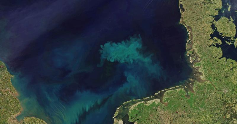 In the 70,000 square kilometer wide German Bight alone, algal bloom produces about ten million tones of biomass in spring.